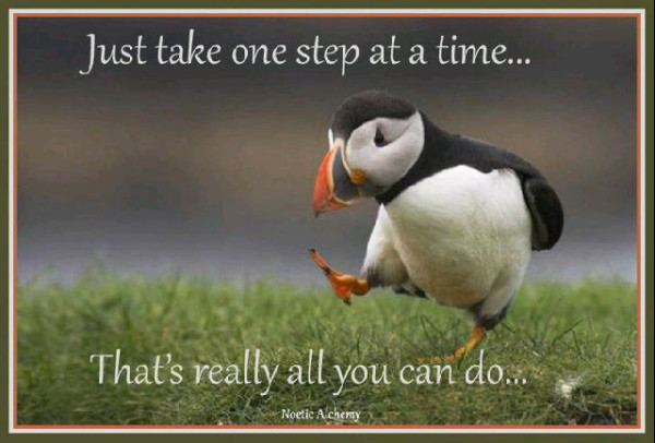one step penguin