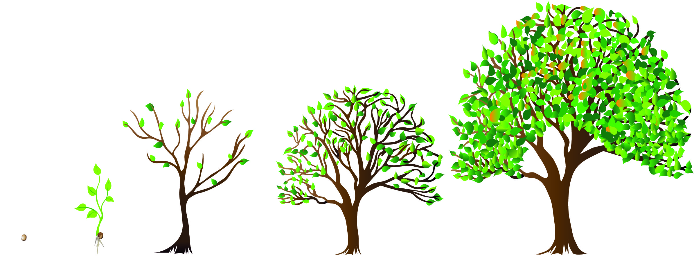 progression of trees