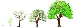 progression of trees